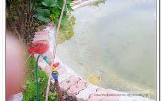 Кормушка для рыбы в пруду своими руками