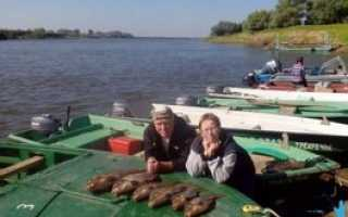 Как приготовить манную болтушку для рыбалки